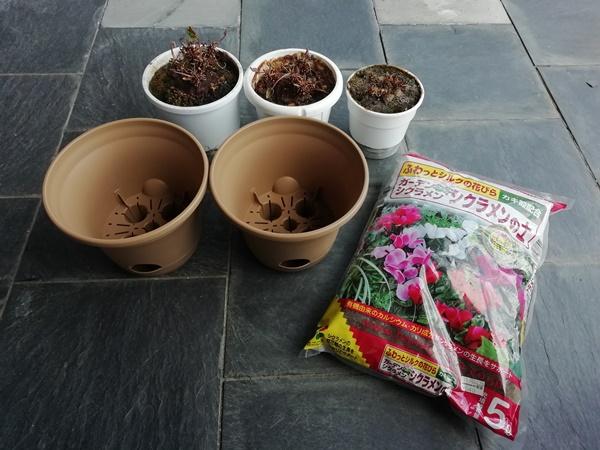 鉢とシクラメンの土